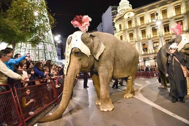 Pacma quiere evitar la presencia de animales en las cabalgatas de reyes