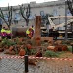 Tala de árboles en Sevilla. La seguridad por encima de todo