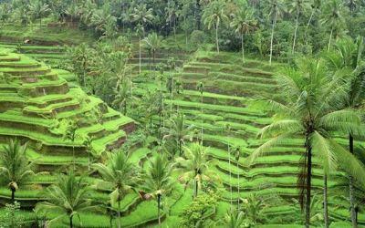 Ceking Tegallalang Rice Terrace