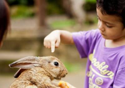 Sewa Mobil Di Bali - Bali Zoo Rabbit