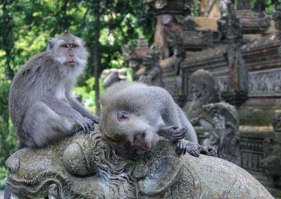 Monkey Forest Ubud Bali 01