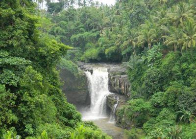 Monkey Forest Ubud Bali - Air Terjun Tegenungan