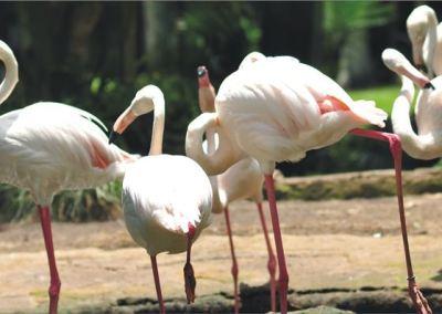 Bali Bird Park - Taman Burung di Bali 11
