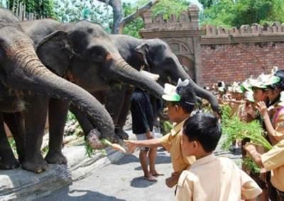 Bali Safari & Marine Park Harga Tiket Masuk Domestik 11