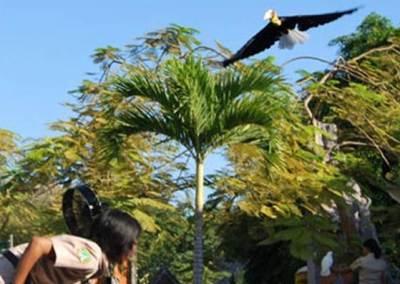 Bali Safari & Marine Park Harga Tiket Masuk Domestik 4