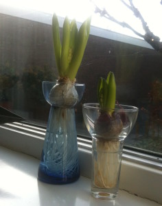 Hyacinths in a vase on the windowsill