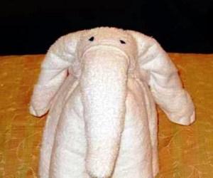 I personally like this elephant idea.