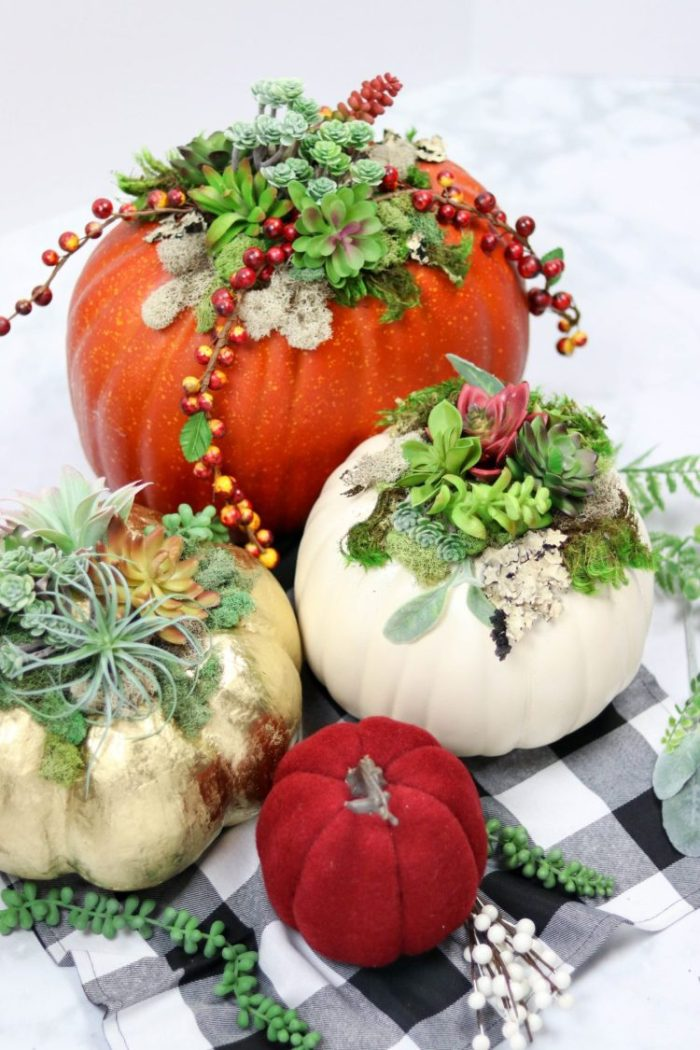 pumpkins with succulents planted inside of them