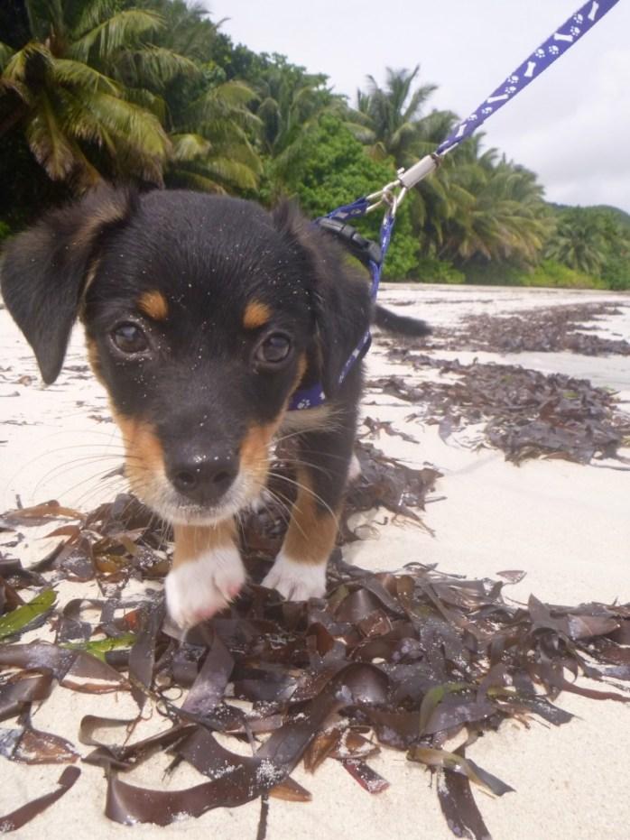 Koopa's first walk