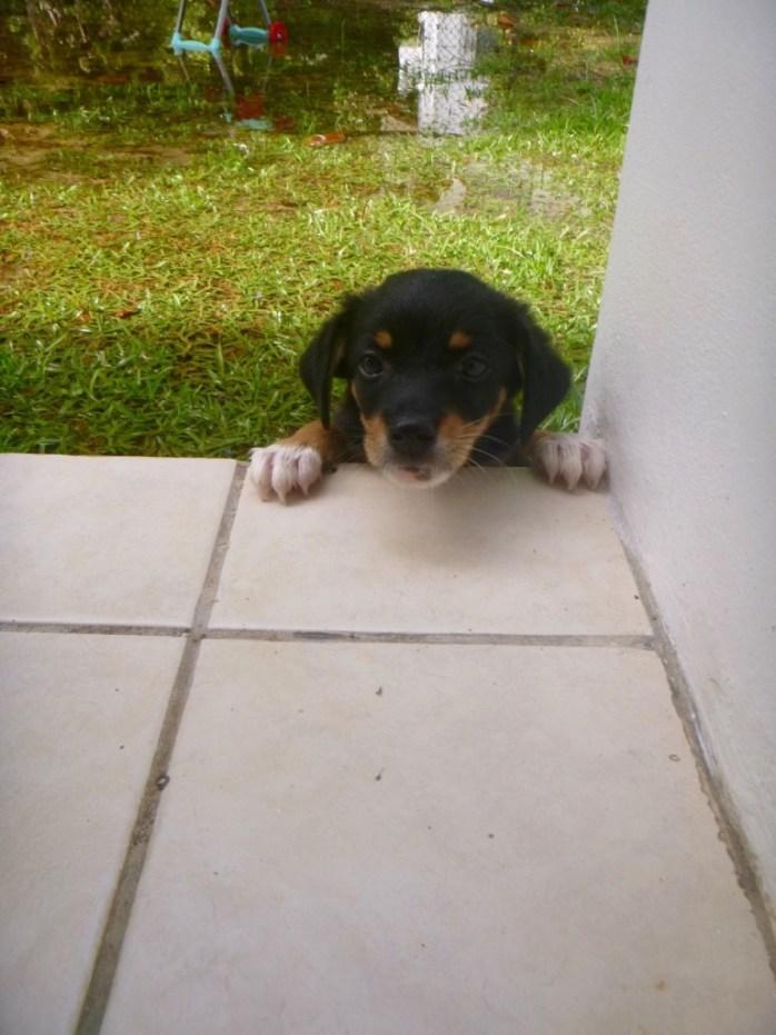 When it rains. Puppy in the rain