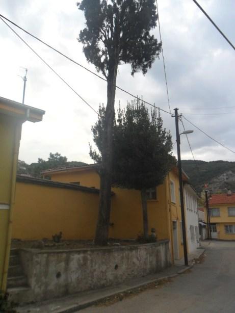 Hazireler ve Ağaçlar