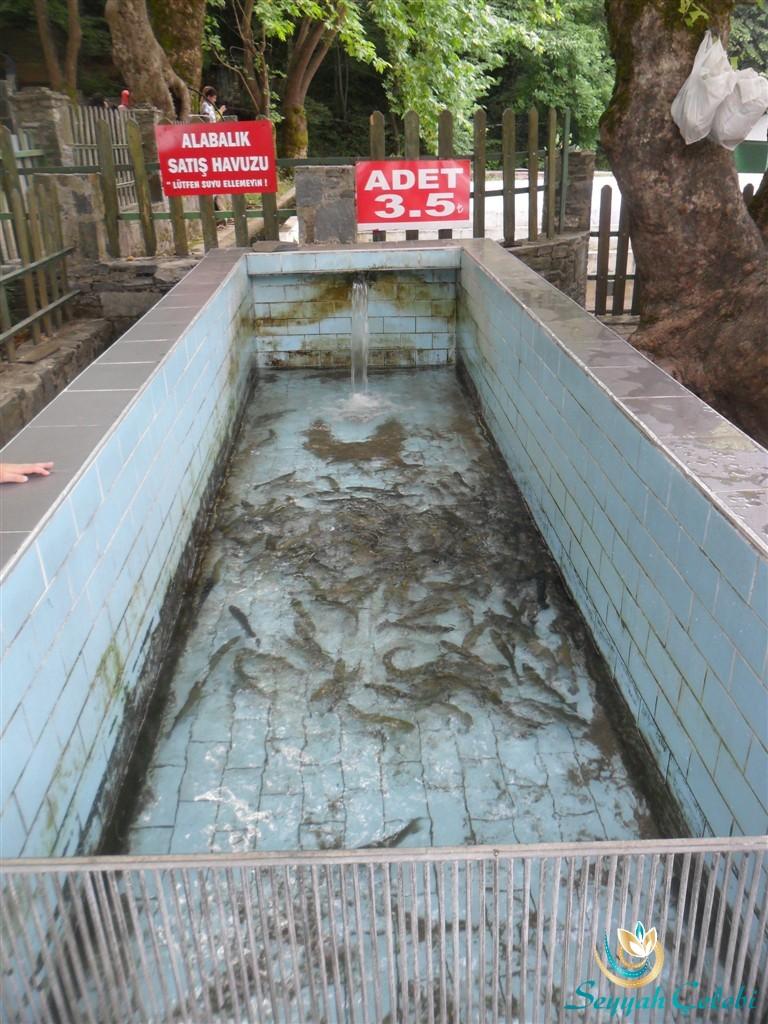 Aral Alabalık Satış