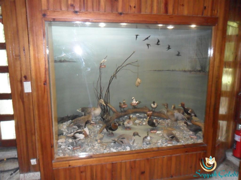 Kuşcenneti Müze Ördekler