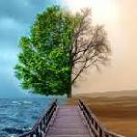 copac verde uscat