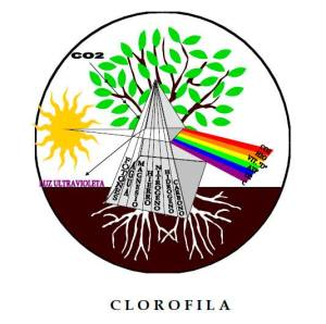 Clorofila1