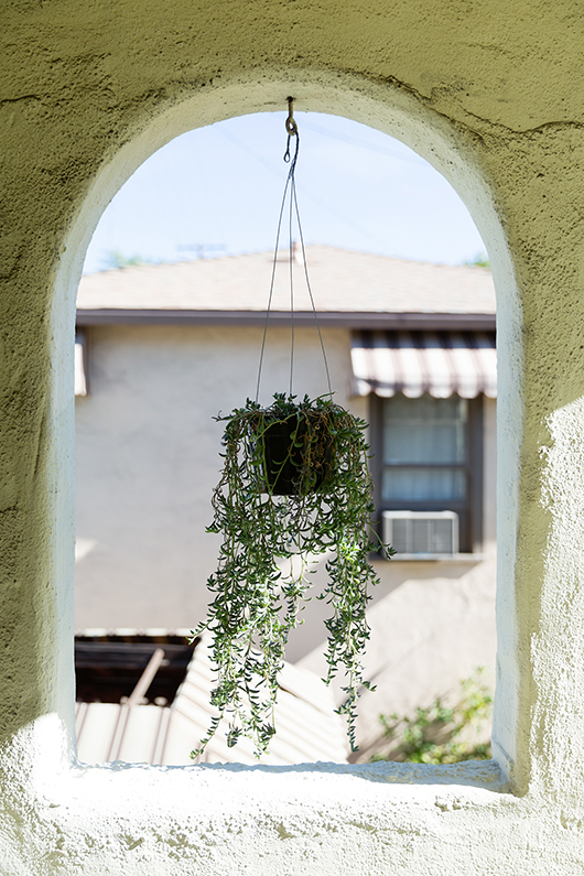hanging plant in outdoor archway / sgirlbybay