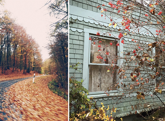 autumn images for new paper / sfgirlbybay