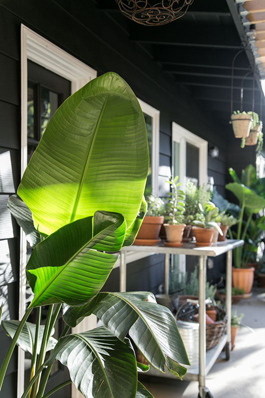 green plants against my black and white house / sfgirlbybay