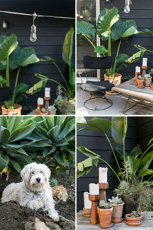 my black house with outdoor potted plants and lucy / sfgirlbybay