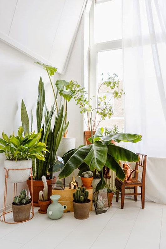 white room with potted plants / sfgirlbybay
