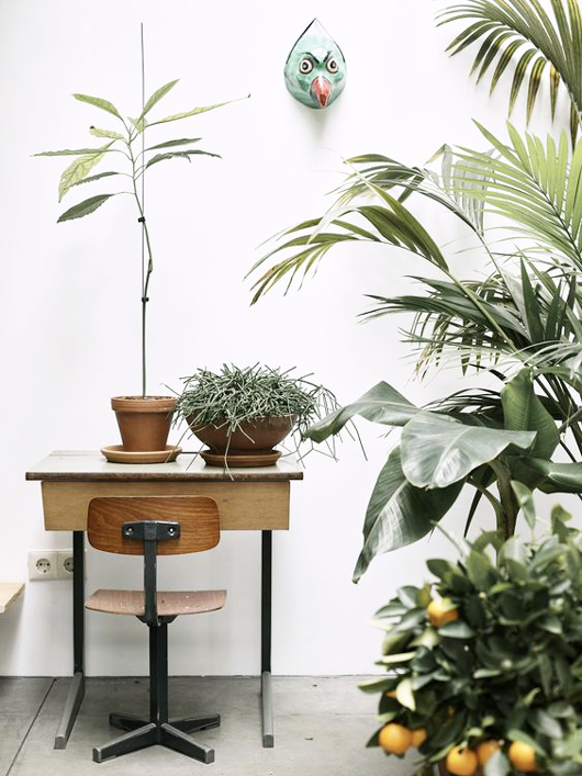 potted plants inside bo bedre in london. / sfgirlbybay