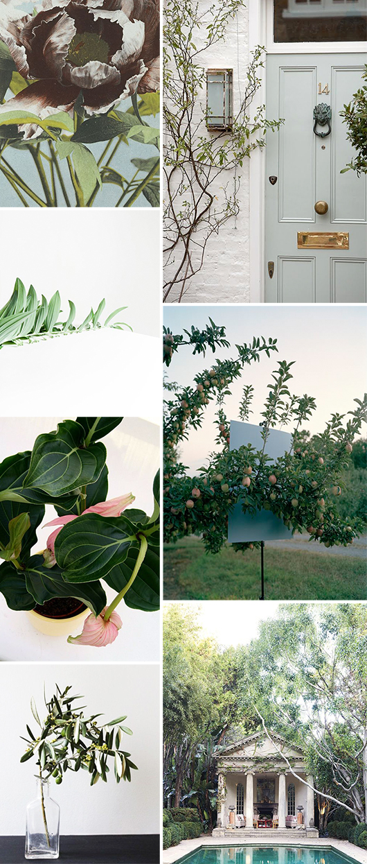 green plant and decor inspiration / sfgirlbybay