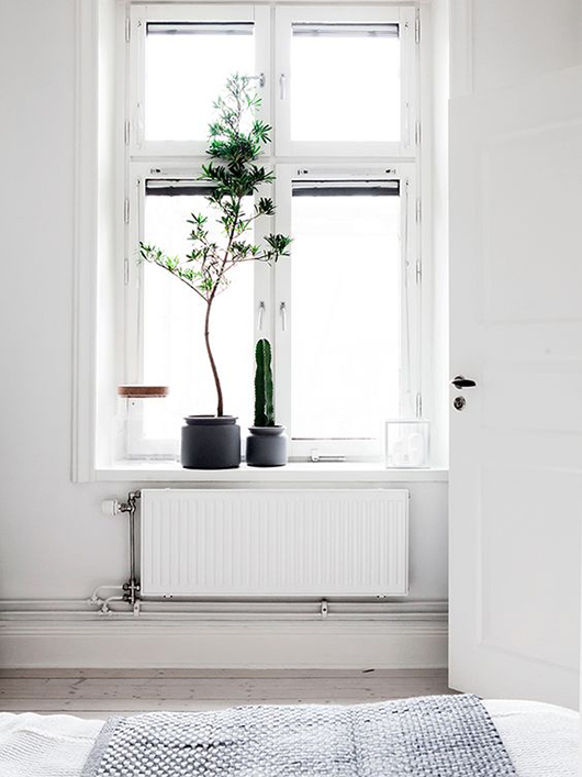 potted tree and cacti in modern white bedroom / sfgirlbybay