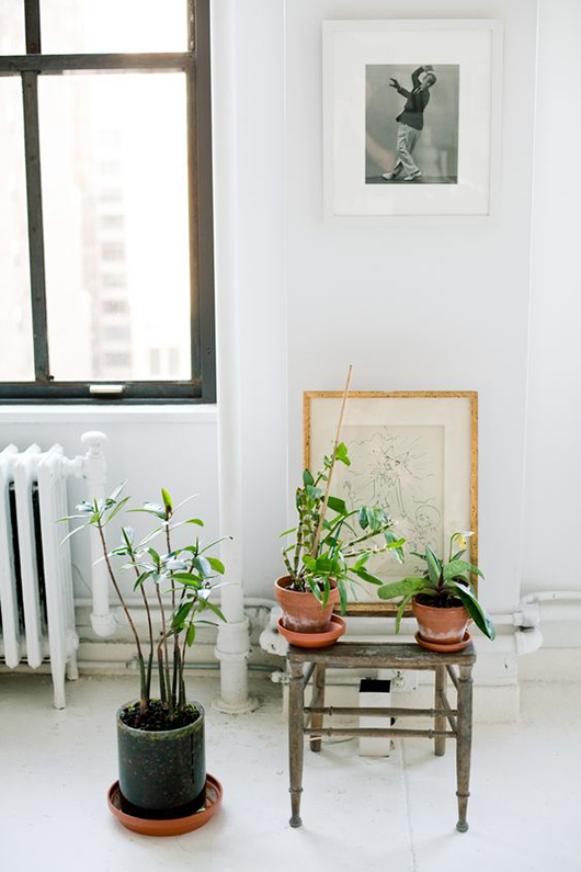 green indoor plants in clay pots via rue magazine. / sfgirlbybay