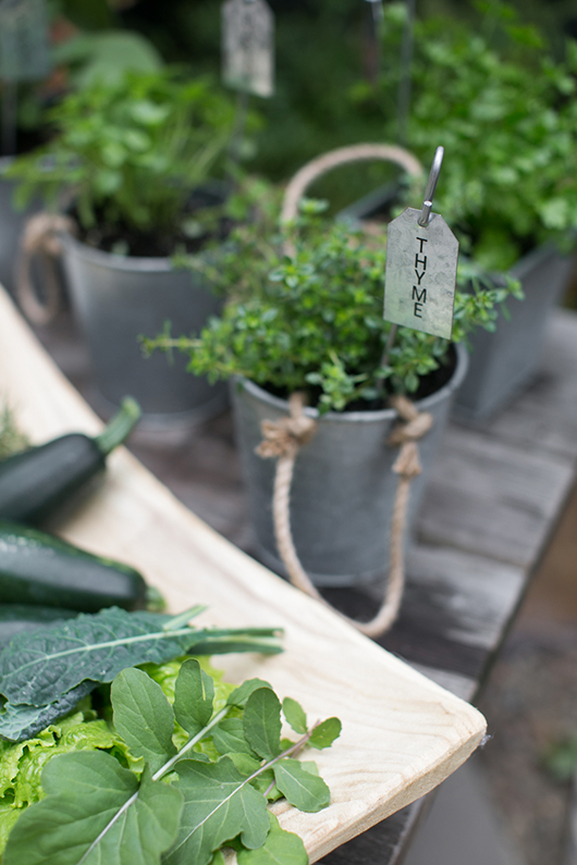 thyme planted in rope planter with stake and label from target in outdoor garden / sfgirlbybay
