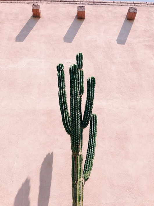 green cactus in front of a pale pink wall. / sfgirlbybay
