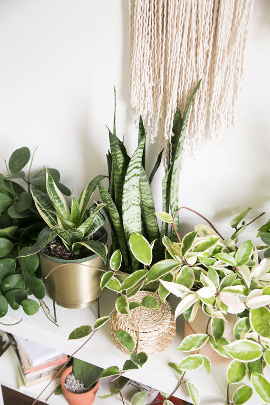 assorted houseplants in lark and arrow studio / sfgirlbybay
