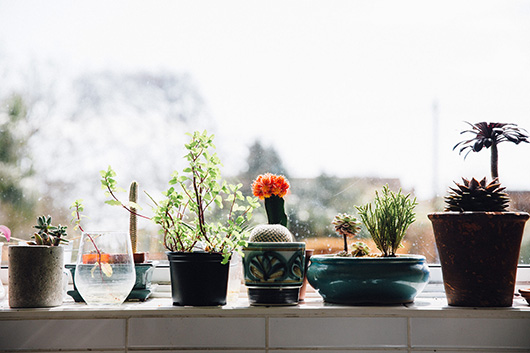 potted plants in the window of the future kept creative workspace. / sfgirlbybay