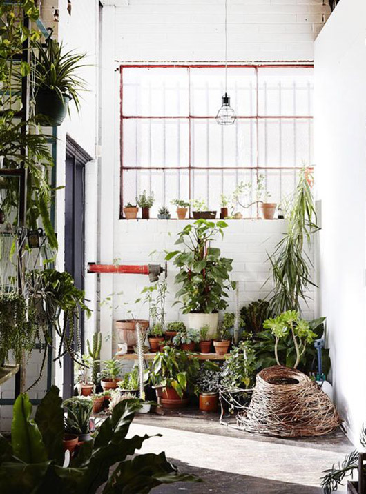 modern indoor greenhouse / sfgirlbybay
