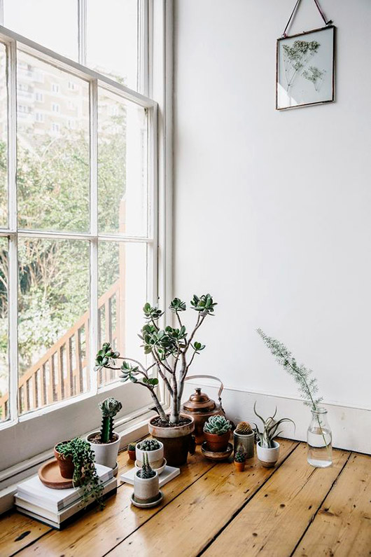 houseplants on the floor near a window / sfgirlbybay
