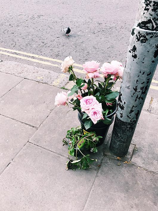 bucket of pink roses on sidewalk. / sfgirlbybay