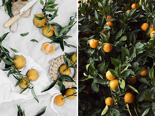 citrus tree and oranges on white tablecloth. / sfgirlbybay