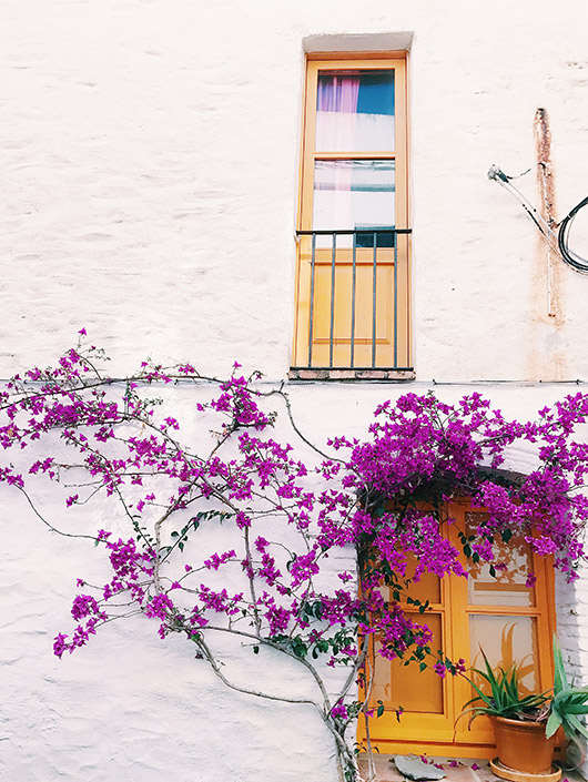 beautiful bougenvilla in spain. / sfgirlbybay