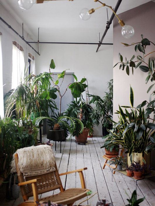 urban jungle of potted plans in williamsburg apartment. / sfgirlbybay