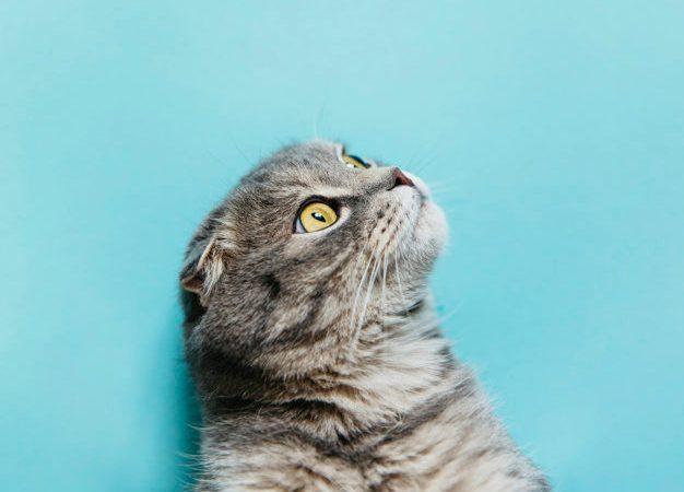 Sgridare il gatto: è giusto o sbagliato?