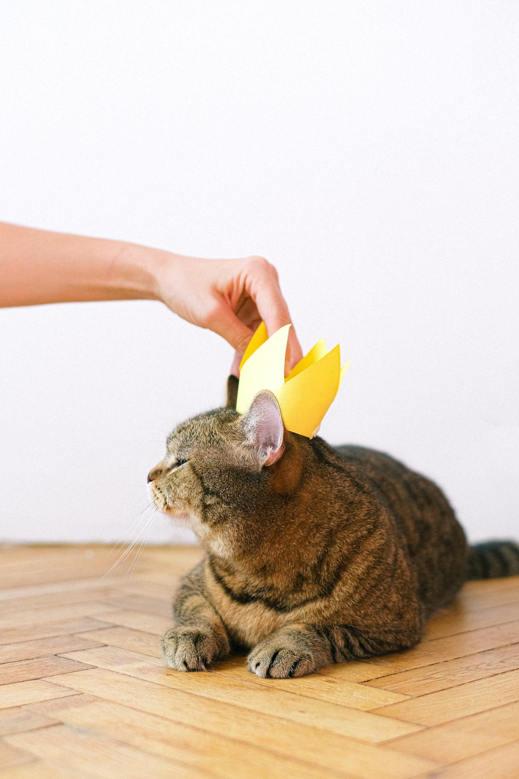 i gatti conquisteranno il mondo
