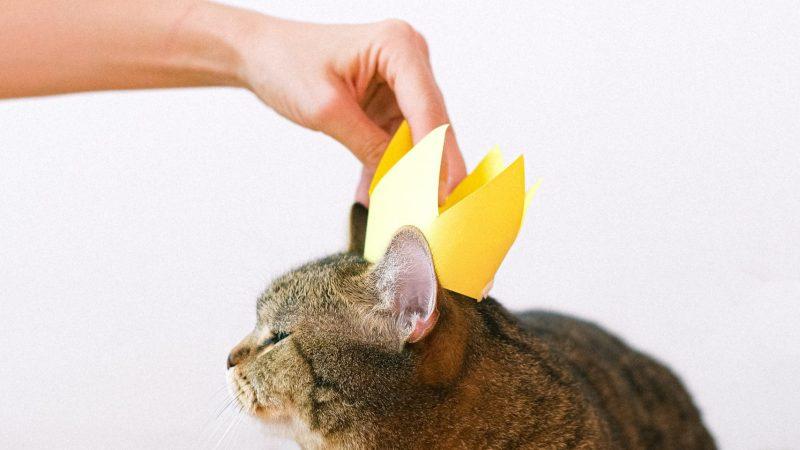 8 Segnali che i gatti conquisteranno il mondo