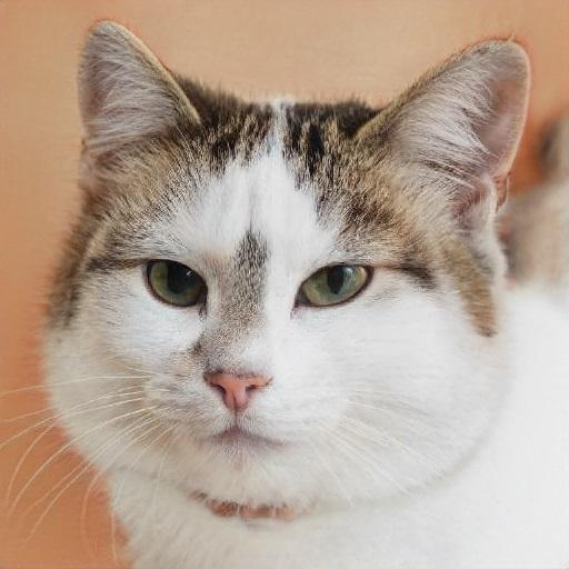 La fine dei gatti su internet: il mistero di This Cat Does Not Exist