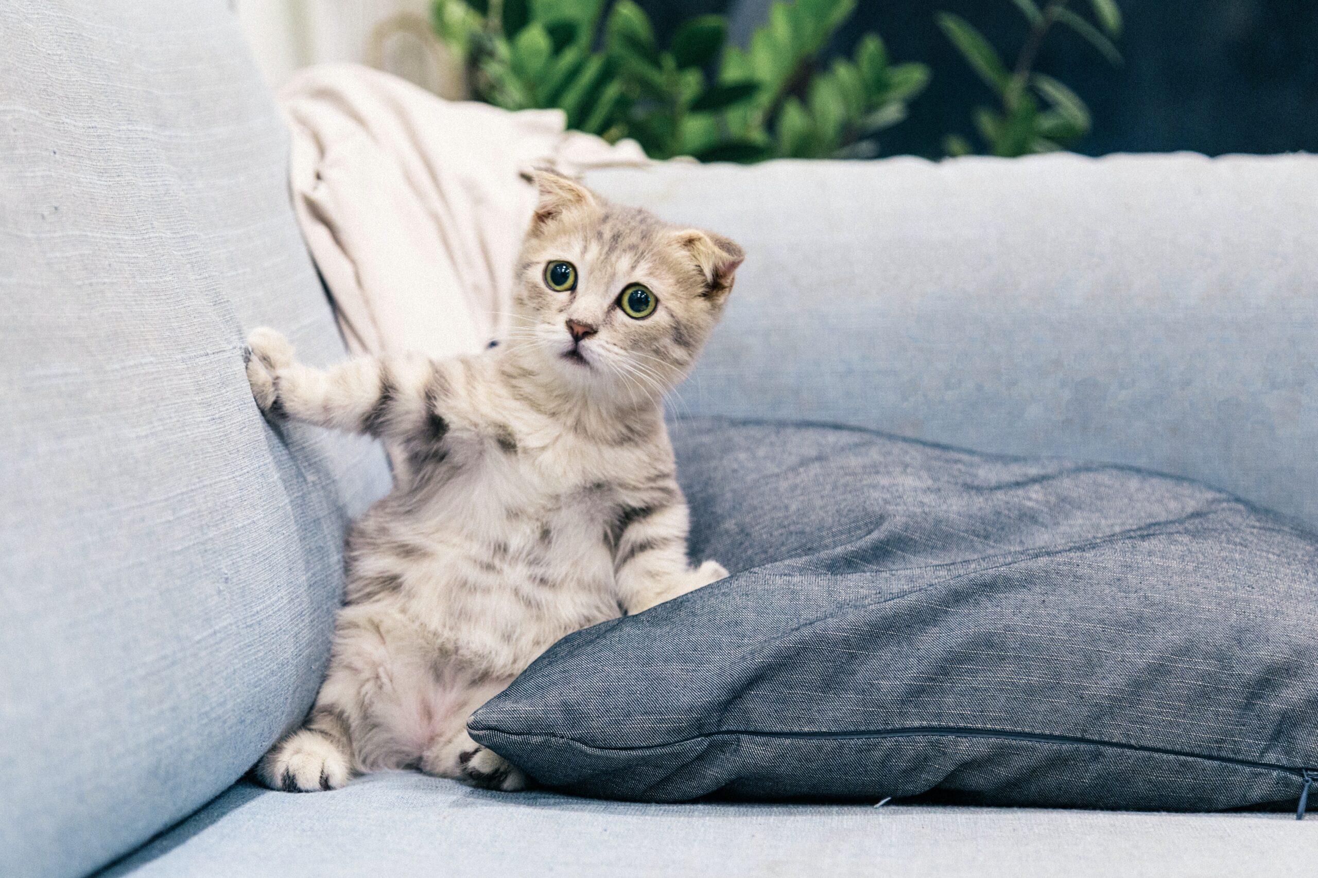 il gatto ha paura dell'aspirapolvere