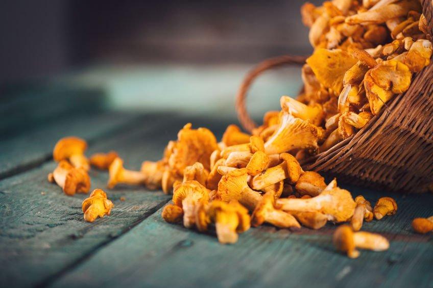finferli-ricette-pasta