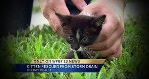 WPBF News 25 kitten rescue Randy Gyllenhaal