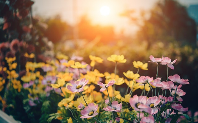 Is your garden ready for summer