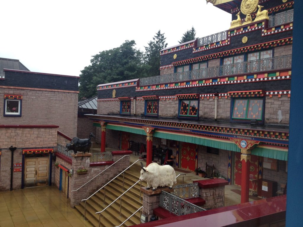 Yaks in Courtyard Samye Ling Aug 22nd 2018