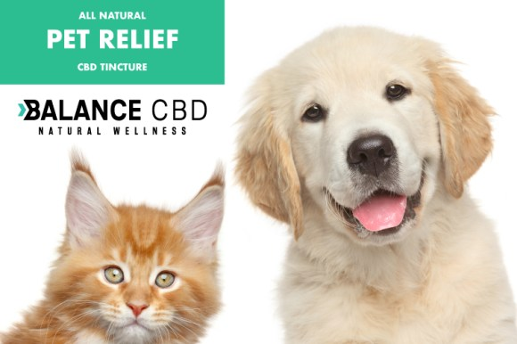 Best CBD Oil For Dogs in 2019 - CBD Oil for Pets Reviews - SF Weekly