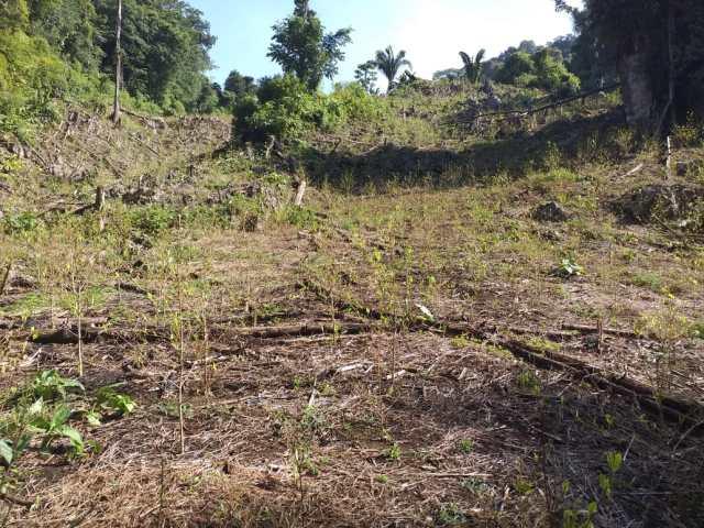 Erradicación de mata de coca