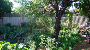 Gardening in a Rental Property